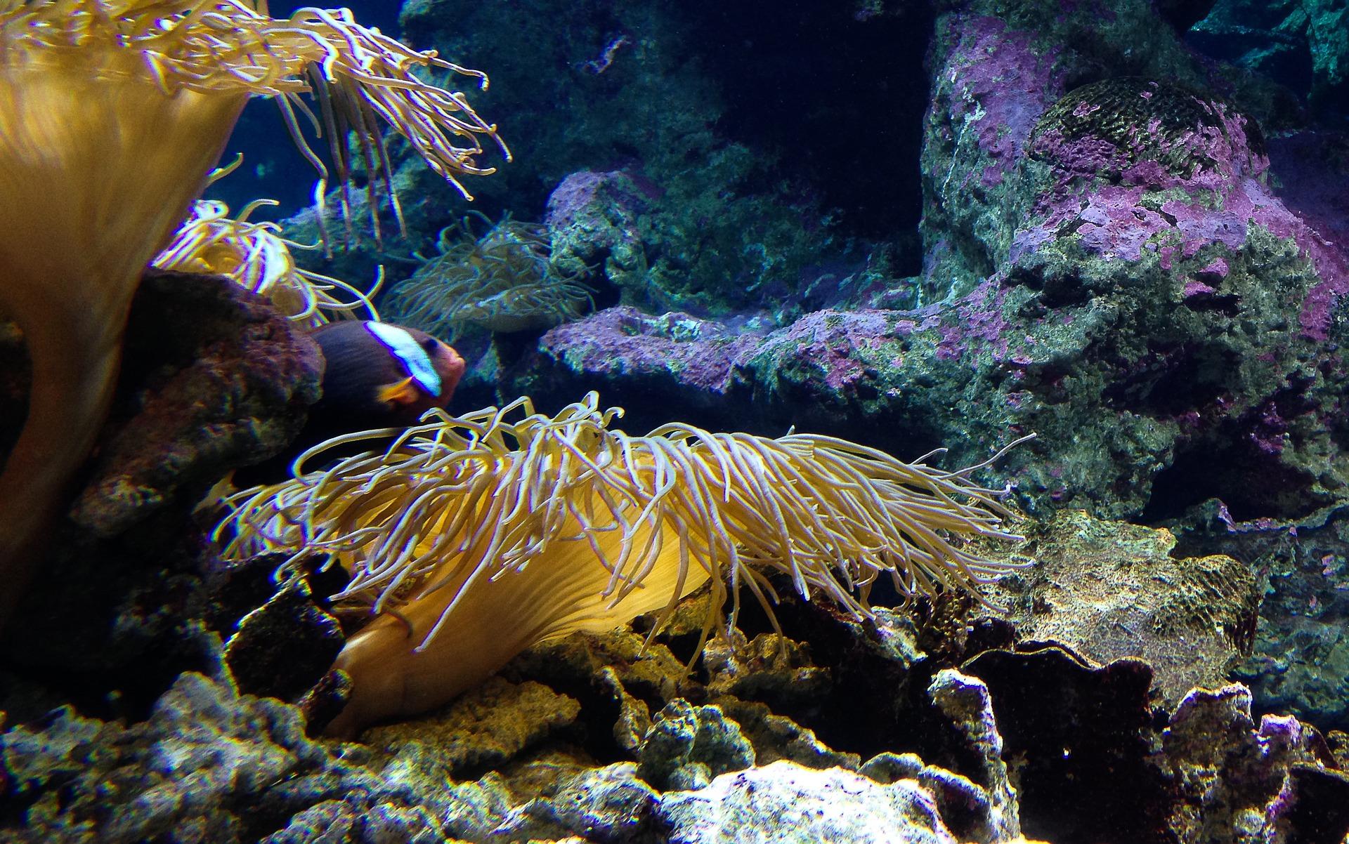 Malene životinje iz okeana opijaju se algama