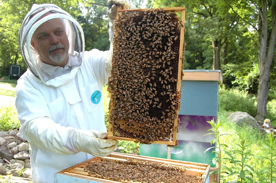 Slovenija: Pčelarstvo na krovovima