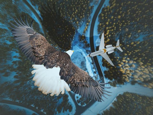 Šta se dešava kada se ptica sudari sa avionom?