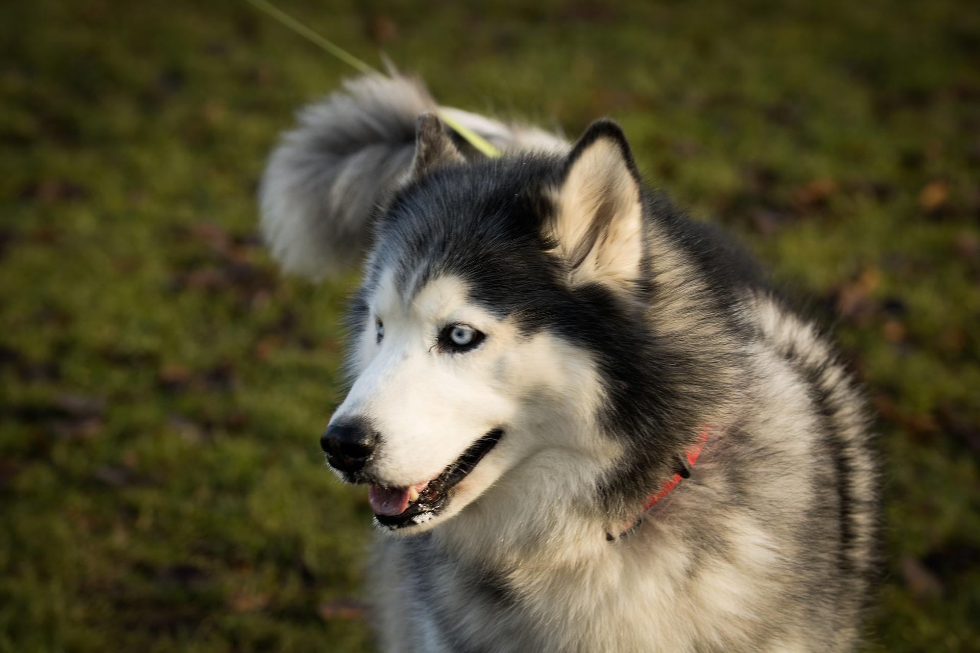 Upoznajte psa koji je spasio grad