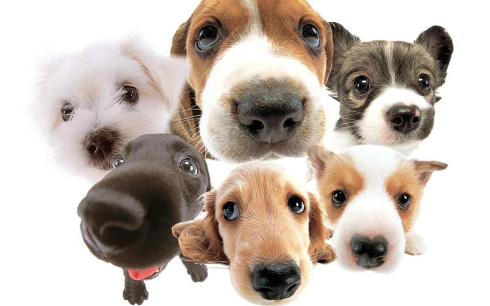 10 najskupljih pasa na svetu