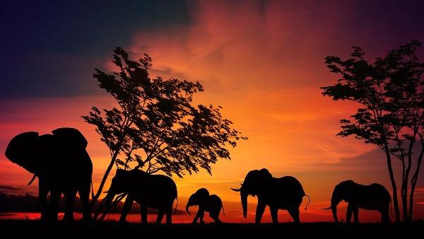 Afrika: Sve čari egzotičnog kontinenta