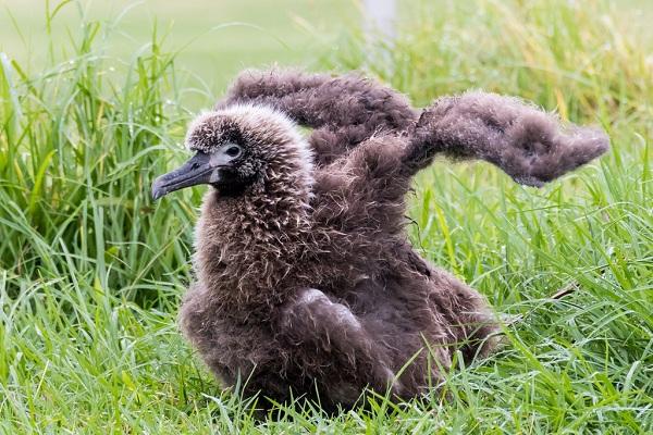 Najstarija ptica je dobila mlade