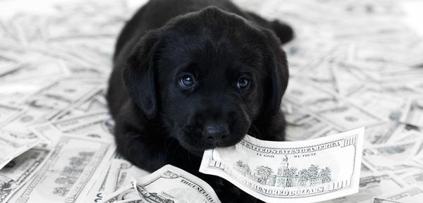Ovo je 9 poslova za ljubitelje životinja