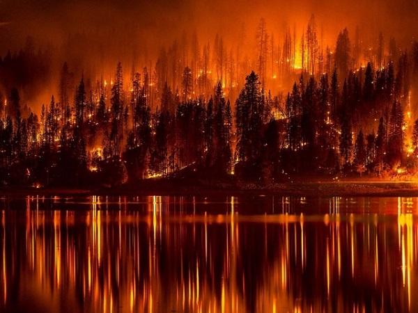 Pustimo šumske požare da gore